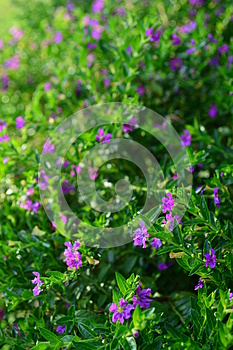 Little purple flower Stock Photo