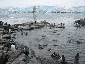 Penguin Pool At Port Lockroy Stock Image - Image: 3703841