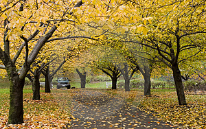 Autumn In Botanic Garden Royalty Free Stock Images - Image: 3708199