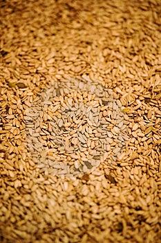 Sunflower Seeds Royalty Free Stock Photo - Image: 3734555