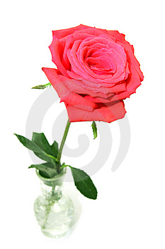 Red Rose In Vase Stock Photography - Image: 3746502
