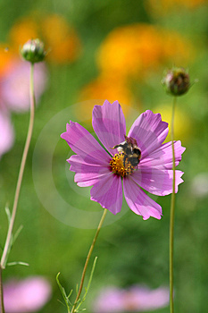 Bee. Stock Images - Image: 3765484