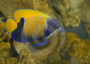 Tropical Fish Stock Image - Image: 3769331