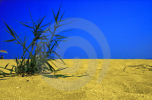 Plant in desert Stock Photography