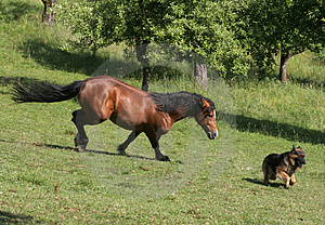 Stock Photography - Horse and Dog
