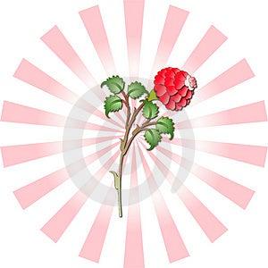 Ottoman Rose Tile Design Stock Image - Image: 3792441