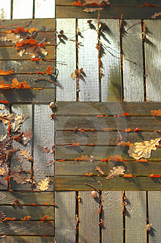 Leaves Of Oak Royalty Free Stock Photos - Image: 3842128