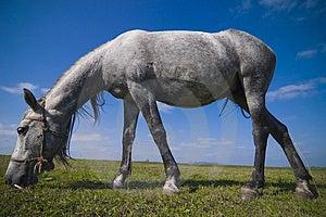 Grazing Horse Closeup Stock Image - Image: 3842671