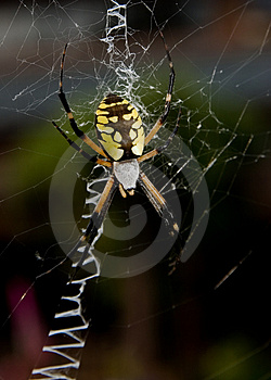 Spider Stock Image - Image: 3869391
