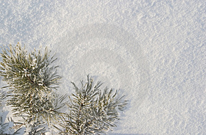 A part of snow tree Royalty Free Stock Image