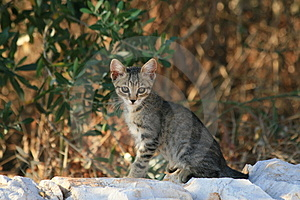 Chaton Photo stock - Image: 3873250