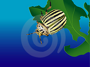 Striped Bug Stock Photo - Image: 3875140