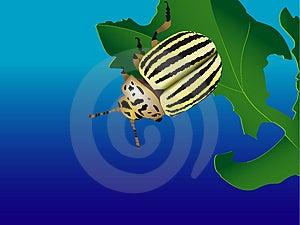 Striped Bug Stock Photo - Image: 3875140