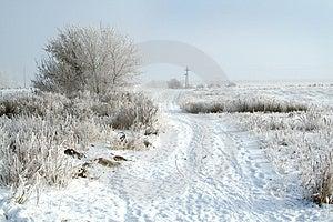 Frozen Tree Stock Image - Image: 3895751
