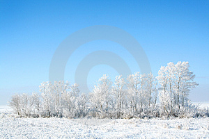 Frozen Trees Stock Images - Image: 3895924