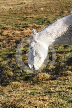Horse Stock Images - Image: 395544