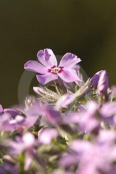 Single Flower Rising Up Royalty Free Stock Photo - Image: 3900505