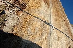 Skugga På Tree Arkivbilder - Bild: 3908554