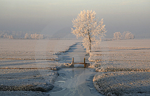 Frozen Trees 5 Stock Images - Image: 3929064