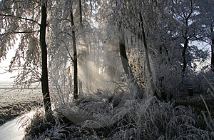 Frozen Trees 2 Stock Photography - Image: 3929852