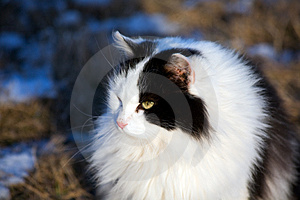Black White Feline Royalty Free Stock Photography - Image: 3932417