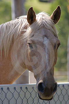 Friendly Horse Stock Photography - Image: 3953662