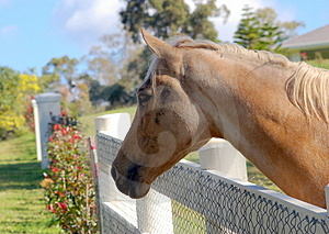 Friendly Horse Royalty Free Stock Photo - Image: 3953675