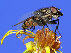 Fly With Beard Stock Photography - Image: 3980342