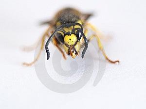 Wasp Stock Image - Image: 3990711