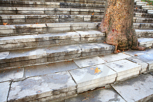 Steps And Tree Stock Images - Image: 3991694