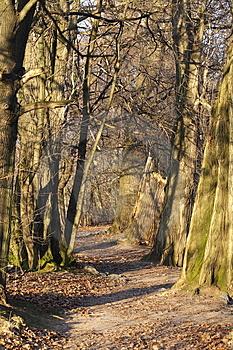 Road Between Trees Stock Photos - Image: 3995503