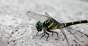 Dragonfly Stock Photo - Image: 40160