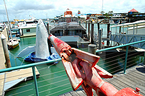 Whale Harpoon Stock Images