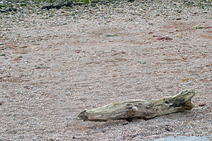 Driftwood Free Stock Image