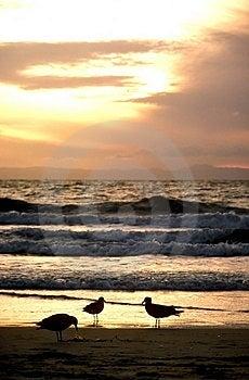Three Gull Sunset Stock Images
