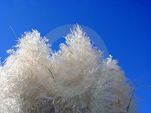 Pampas And The Sky Stock Photo