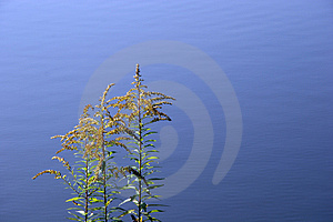 Weed Over Water Stock Photo