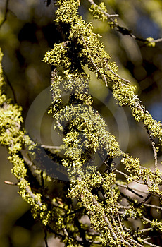 Branches Covered In Moss Royalty Free Stock Photos - Image: 45248