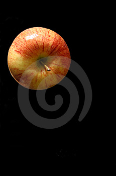 Apple Top On Black Free Stock Photography