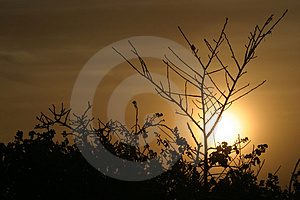 Sunrise Silhouettes 2 Free Stock Photography