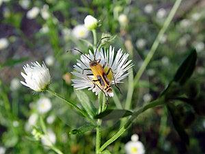 Insecto floreciente Imagen de archivo libre de regalías