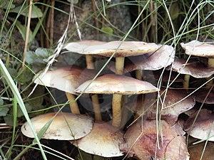 Mushrooms Free Stock Photos