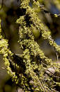Branches covered in Moss Royalty Free Stock Photos
