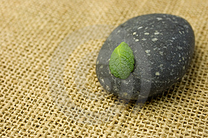 Zen Stone And Leaf Royalty Free Stock Photography - Image: 4006107
