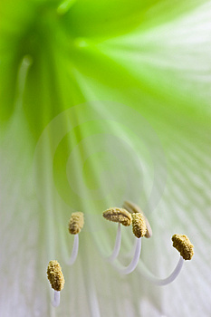Floating Stamen Royalty Free Stock Photo - Image: 4013935