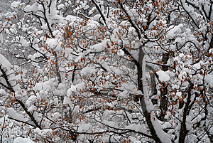 Snowy Tree Stock Photography - Image: 4021652