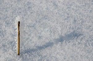 Frozen Stick Stock Photo - Image: 4024950