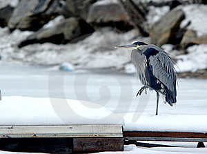 Heron On A Dock. Stock Photography - Image: 4050482