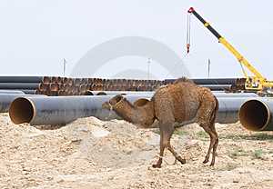 Camel On Industry Background Royalty Free Stock Photos - Image: 4056088