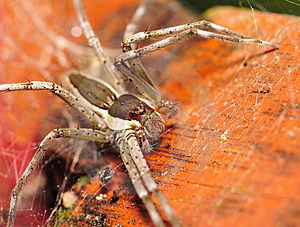 Spider Stock Photography - Image: 4057372